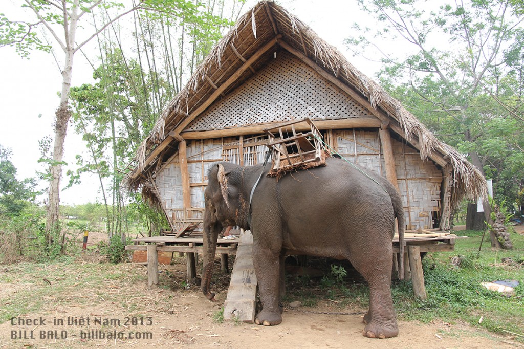 Chú voi này tên là A Tuk. Sinh năm 1983