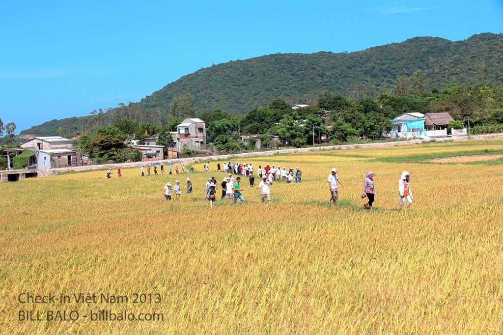 Dòng người đi vào chùa cổ qua đường ruộng