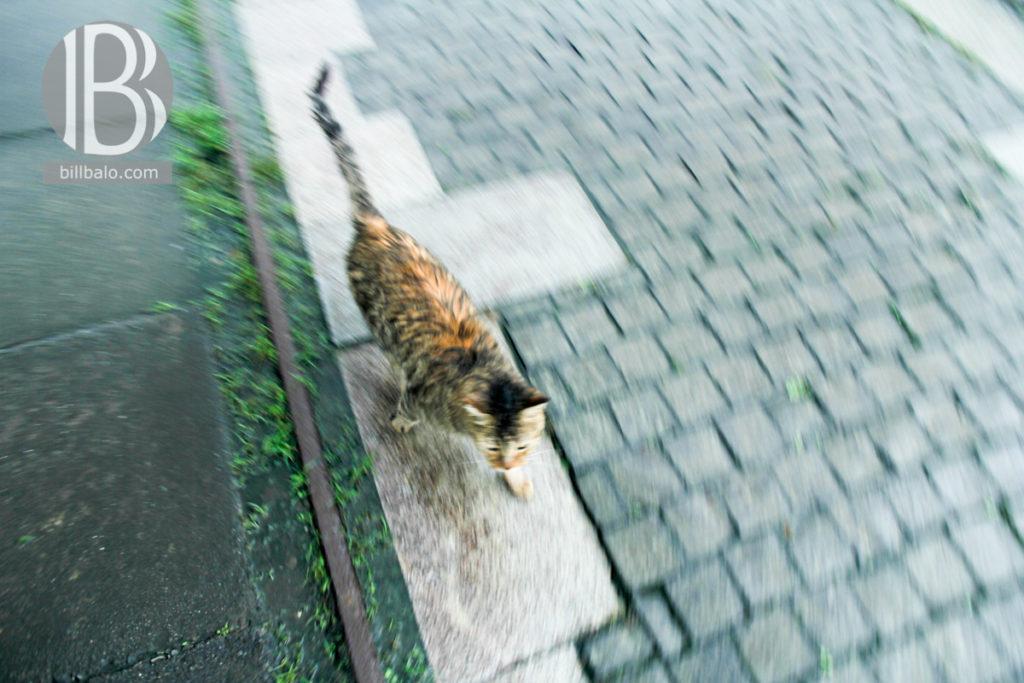 làng mèo hutong