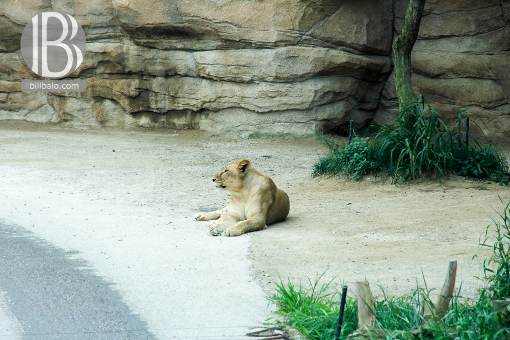Safari World ở Everland