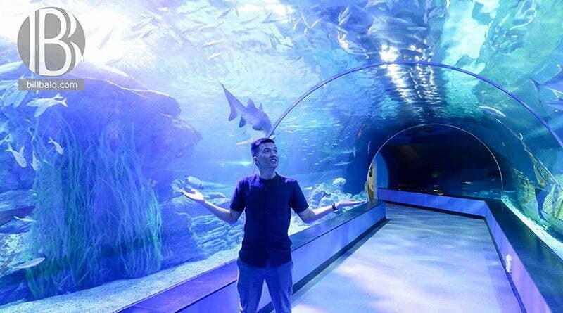 Busan SEA LIFE Aquarium – không gian đại dương kỳ thú ở Hàn Quốc