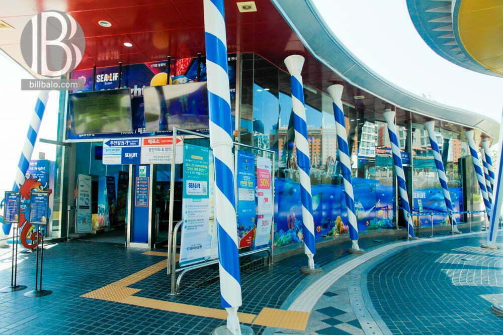 Busan SEA LIFE Aquarium - không gian đại dương kỳ thú ở Hàn Quốc