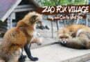 Zao Kitsune Mura – Độc đáo làng nuôi cáo Zao ở Miyagi, Nhật Bản